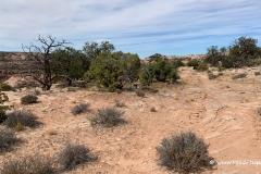 Neck-Spring-Trail-2
