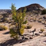 Horseshoe-Canyon-170