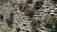 Granit-Rose-27