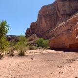 Horseshoe-Canyon-100