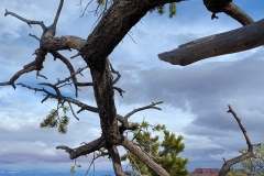 C-Canyonlands-National-Park-Island-in-the-Sky-District